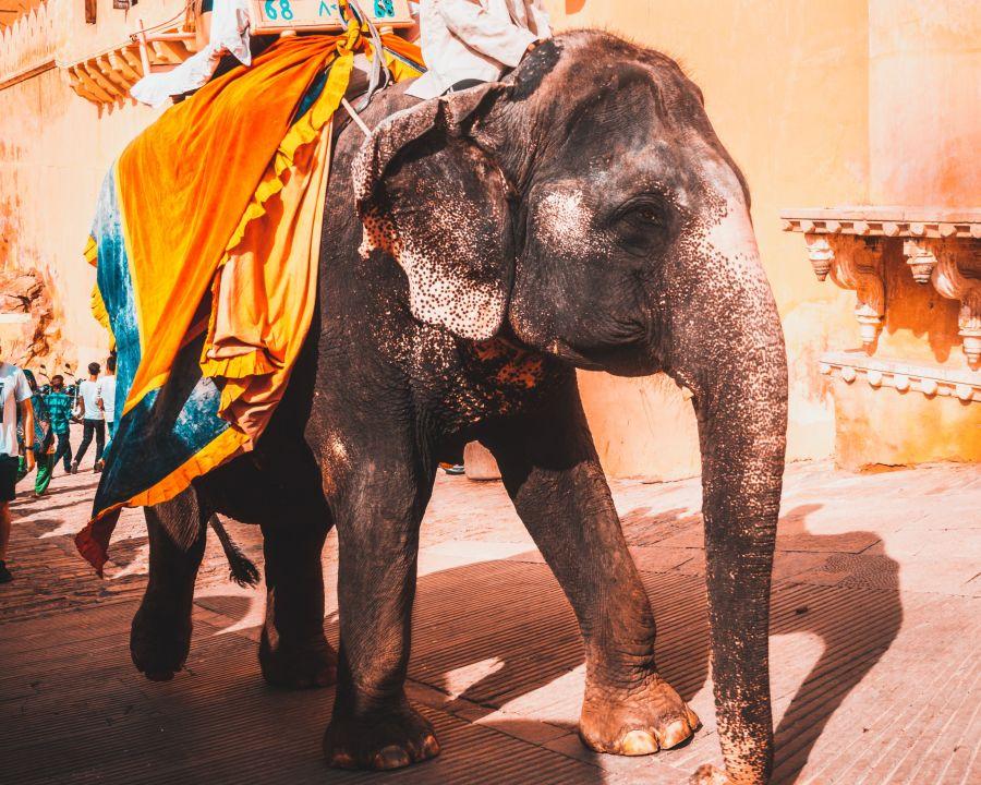 alt-text man-and-woman-riding-an-elephant-2846071 1