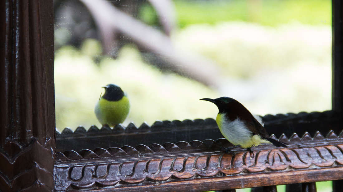 Bird Watching Fort Jadhavgadh Heritage Resort Hotel Pune- resort near mumbai