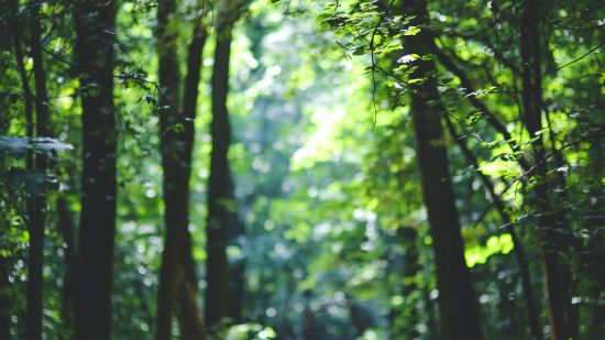 Forests, Satpura National Park Resorts, Satpura Resort, Jungle resorts in Madhya Pradesh, Forest resorts in Madhya Pradesh,  Wildlife resorts in Madhya Pradesh