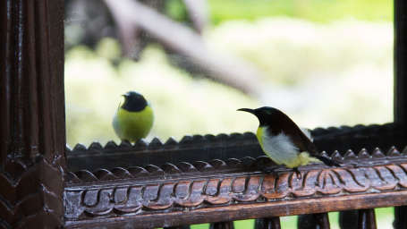Bird Watching Fort Jadhavgadh Heritage Resort Hotel Pune
