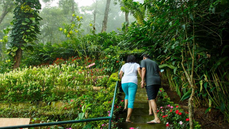 Misty Mountain Resort, Munnar Munnar Trekking trail Misty Mountain Resort Munnar 3