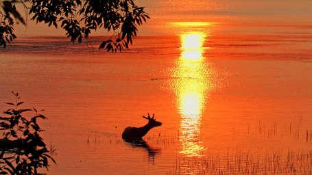 wildlife-Reni Pani Jungle Lodge-Best Hotels in Madhya Pradesh 19