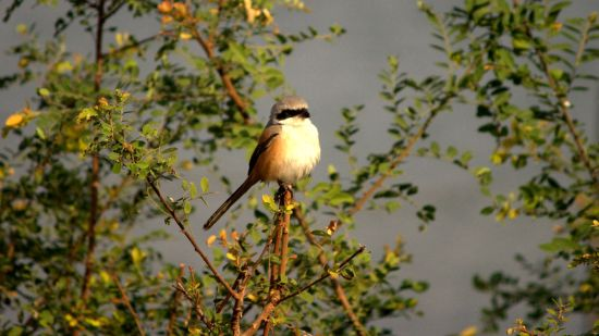 Birdwatching at our resort in Bhopal, Luxury Resort in Bhopal, Jehan Numa Retreat, Bhopal