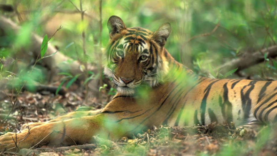 Periyar Tiger Reserve 1