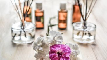 white-and-purple-flower-plant-on-brown-wooden-surface-161599