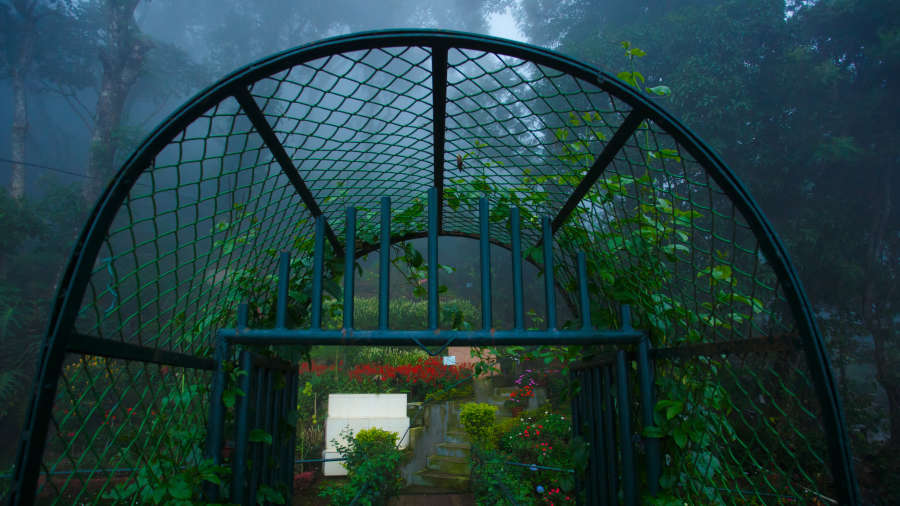 Misty Mountain Resort, Munnar Munnar Bridge from terrace Misty Mountain Resort Munnar 3