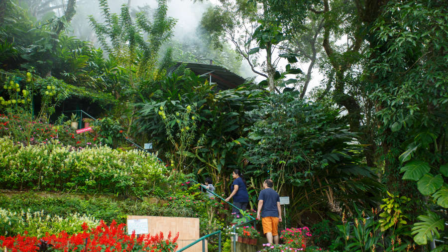 Misty Mountain Resort, Munnar Munnar Trekking trail Misty Mountain Resort Munnar 2