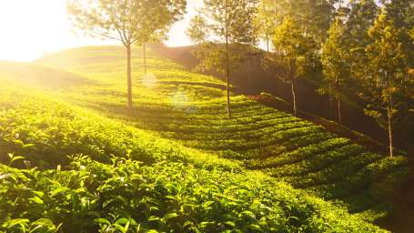 tea garden summit grace hotel hotels in darjeeling