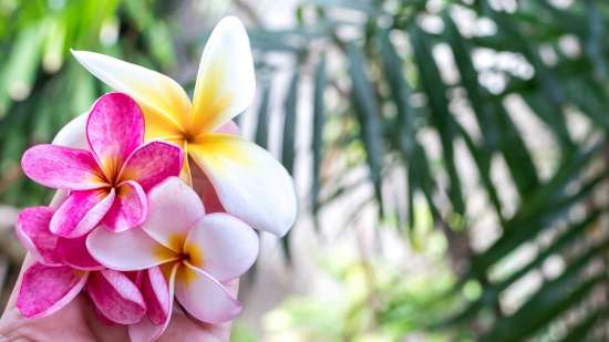 bali-beautiful-beauty-bloom-433539