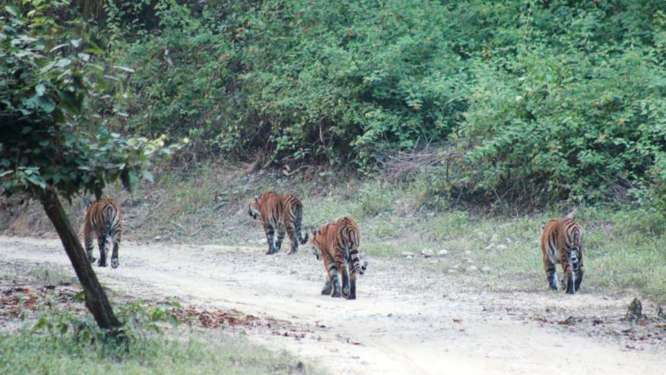 The Riverview Retreat Corbett Mother with cubs