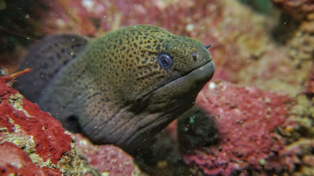 Moray Eel Photo by Rylan Pereira