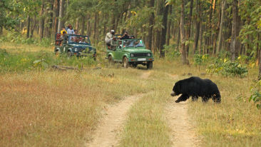Satpura - A great place to see bear
