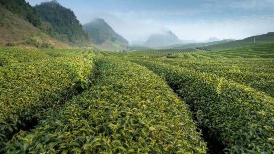 green-plantation-2884905