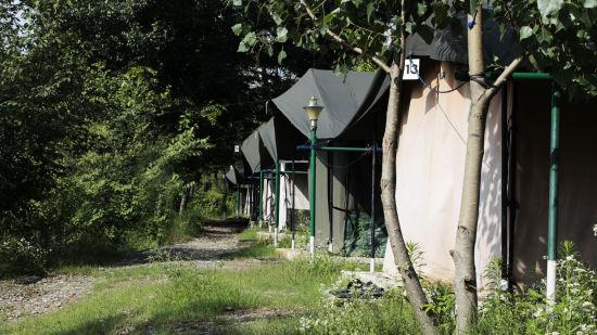 Let s Camp Junga Tents 1