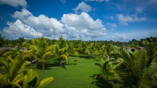 Symphony Palms Garden
