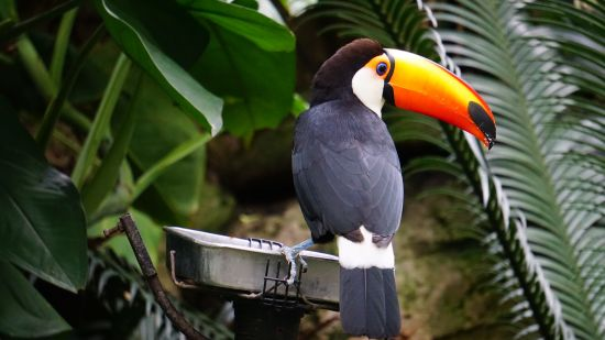 animal-avian-beak-1123767