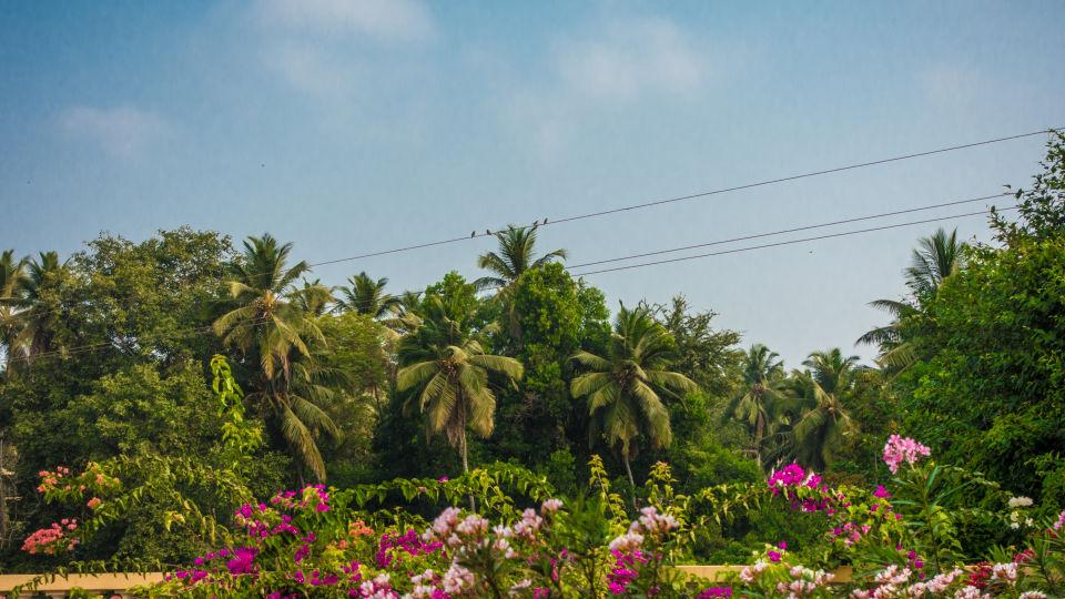 Casa Cottage Hotel, Bangalore Bangalore Benaulim - Goa - Pool - Beach - holiday - 8