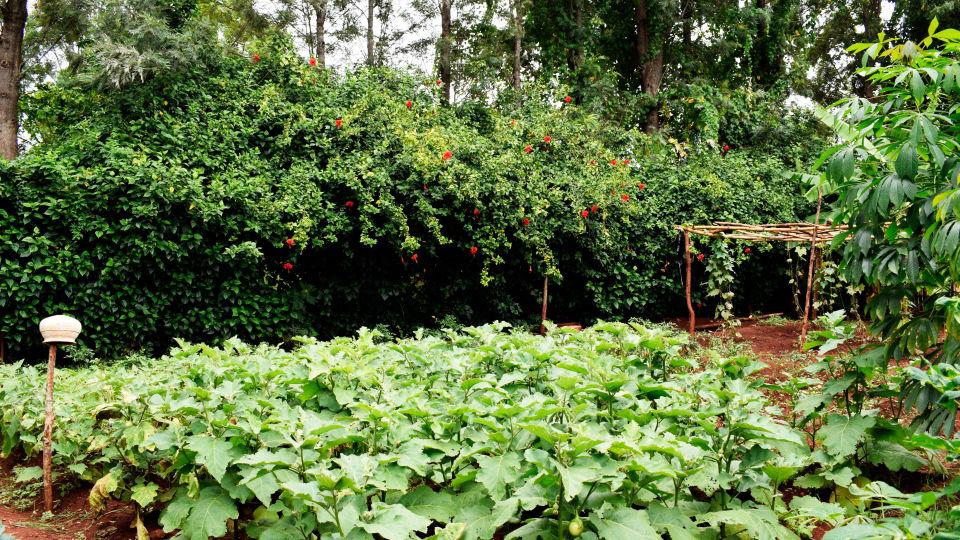 Organic-Garden-1