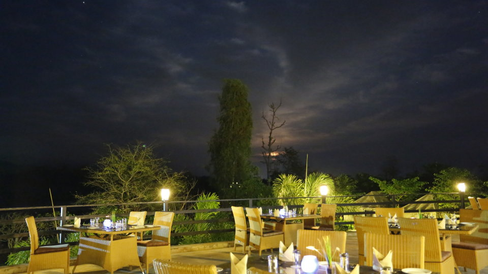 The Gin tree at the golden tusk resort ramnagar 1