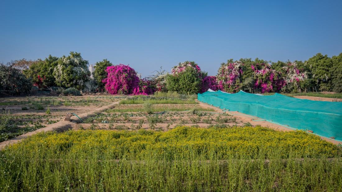 Karma Lakelands Organic Farming in Gurgaon Organic Farming Techniques 1