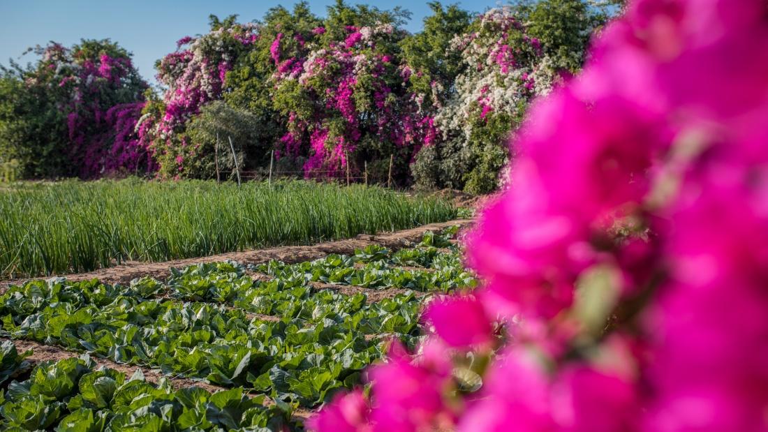 Karma Lakelands Organic Farming in Gurgaon Organic Farming Techniques 5