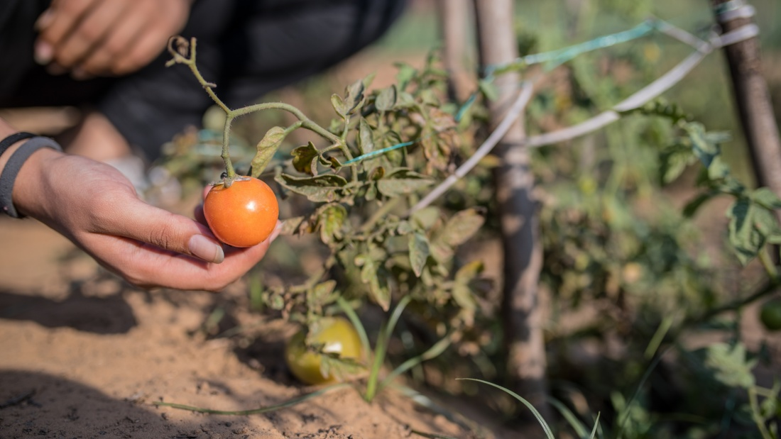 Karma Lakelands Organic Farming in Gurgaon Organic Farming Techniques 7