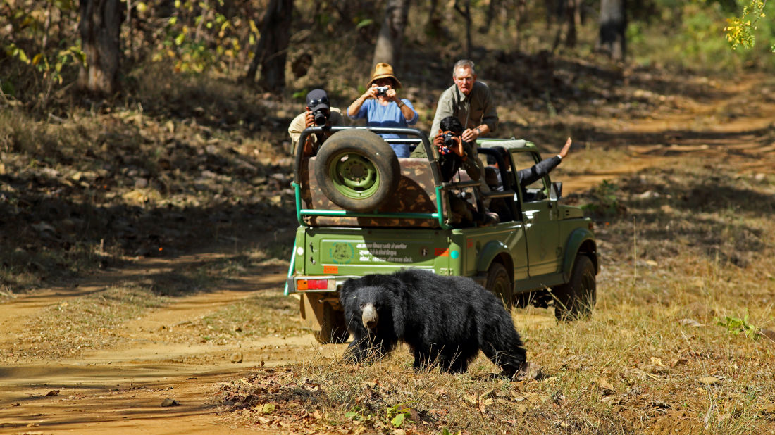 Wildlife Safari at Satpura National Park, Wildlife Sanctuary close to our resort in Satpura, Drive through the Satpura National Park, Satpura Resort, Jungle resorts in Madhya Pradesh, Forest resorts in Madhya Pradesh,  Wildlife resorts in Madhya Pradesh