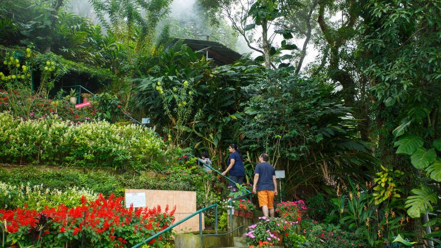 Misty Mountain Resort, Munnar Munnar Garden view from terrace Misty Mountain Resort Munnar 1