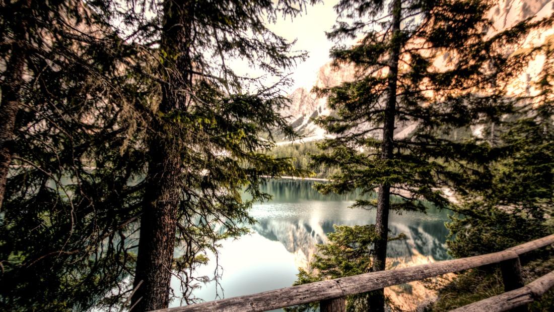 daylight-environment-forest-lake-516863