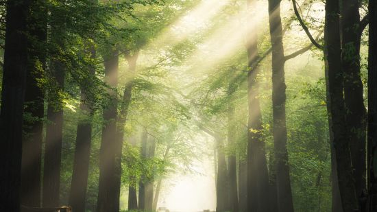 pathway-middle-green-leafed-trees-with-sun-shining-through-branches