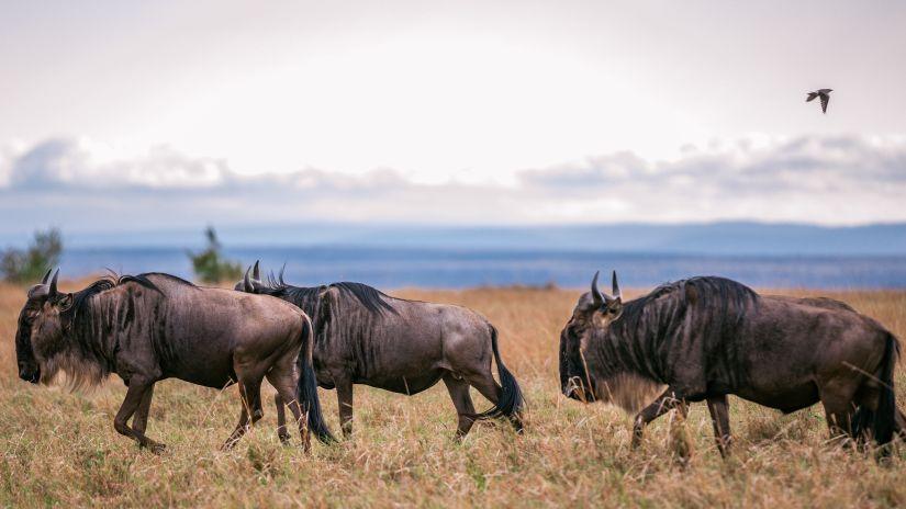 Multi-day Safaris