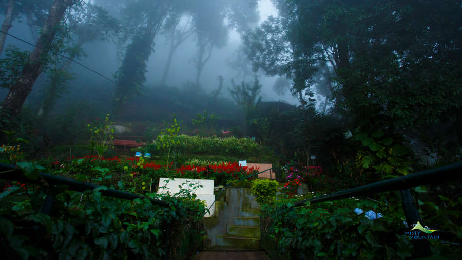 Gallery Misty Mountain Resort Munnar Resorts Resorts