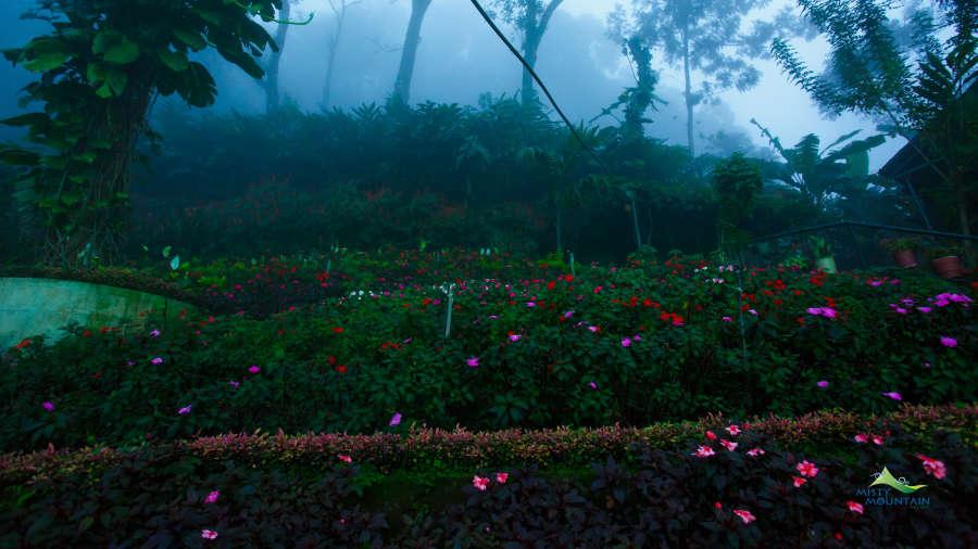 Misty Mountain Resort, Munnar Munnar Garden view from terrace Misty Mountain Resort Munnar 4