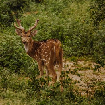 Malsi Deer Park, Hotel Pacific Dehradun
