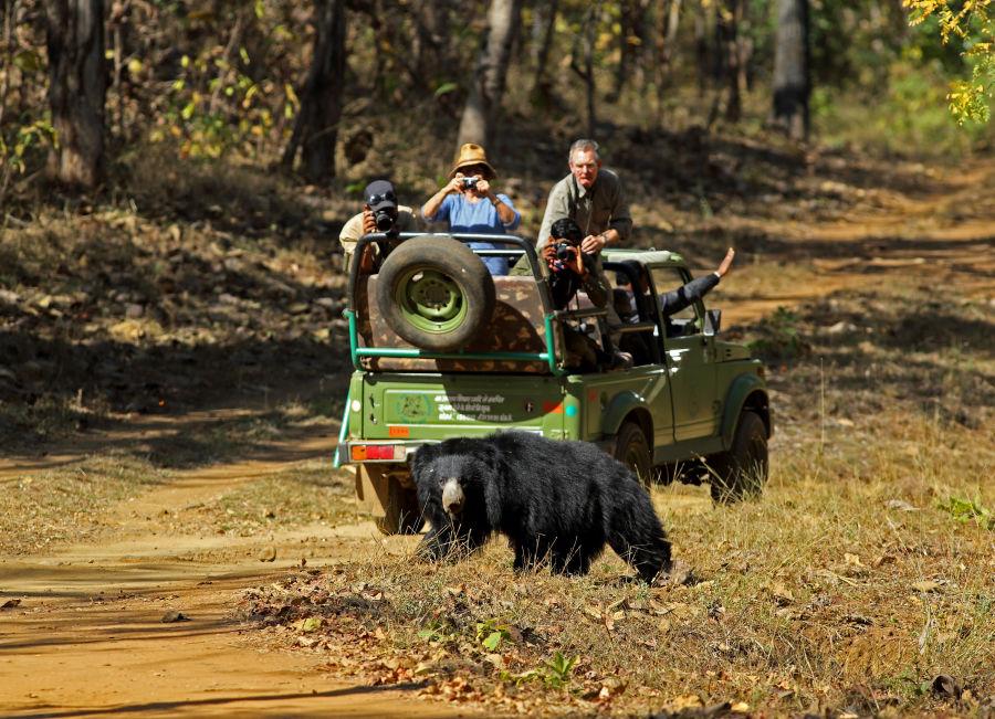 alt-text Wildlife Safari at Satpura National Park, Wildlife Sanctuary close to our resort in Satpura, Drive through the Satpura National Park, Satpura Resort, Jungle resorts in Madhya Pradesh, Forest resorts in Madhya Pradesh,  Wildlife resorts in Madhya Pradesh