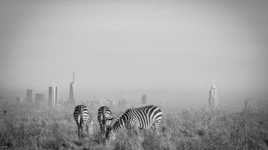 Places to Visit In Nairobi, Best Western Plus Westlands