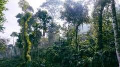 Tranquil Resort, Wayanad Wayanad Tranquil Plantation 3 copy