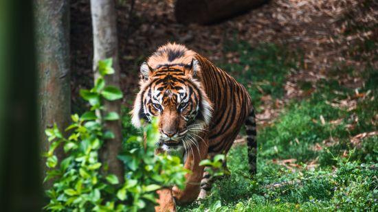 Rosa Bandhavgarh Meadows Tiger Safari Lodge, Bandhavgarh Jungle Lodge, Bandhavgarh Resort 37