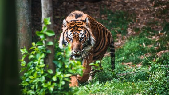 Rosa Bandhavgarh Meadows, Bandhavgarh Jungle Lodge, Bandhavgarh Resort 37