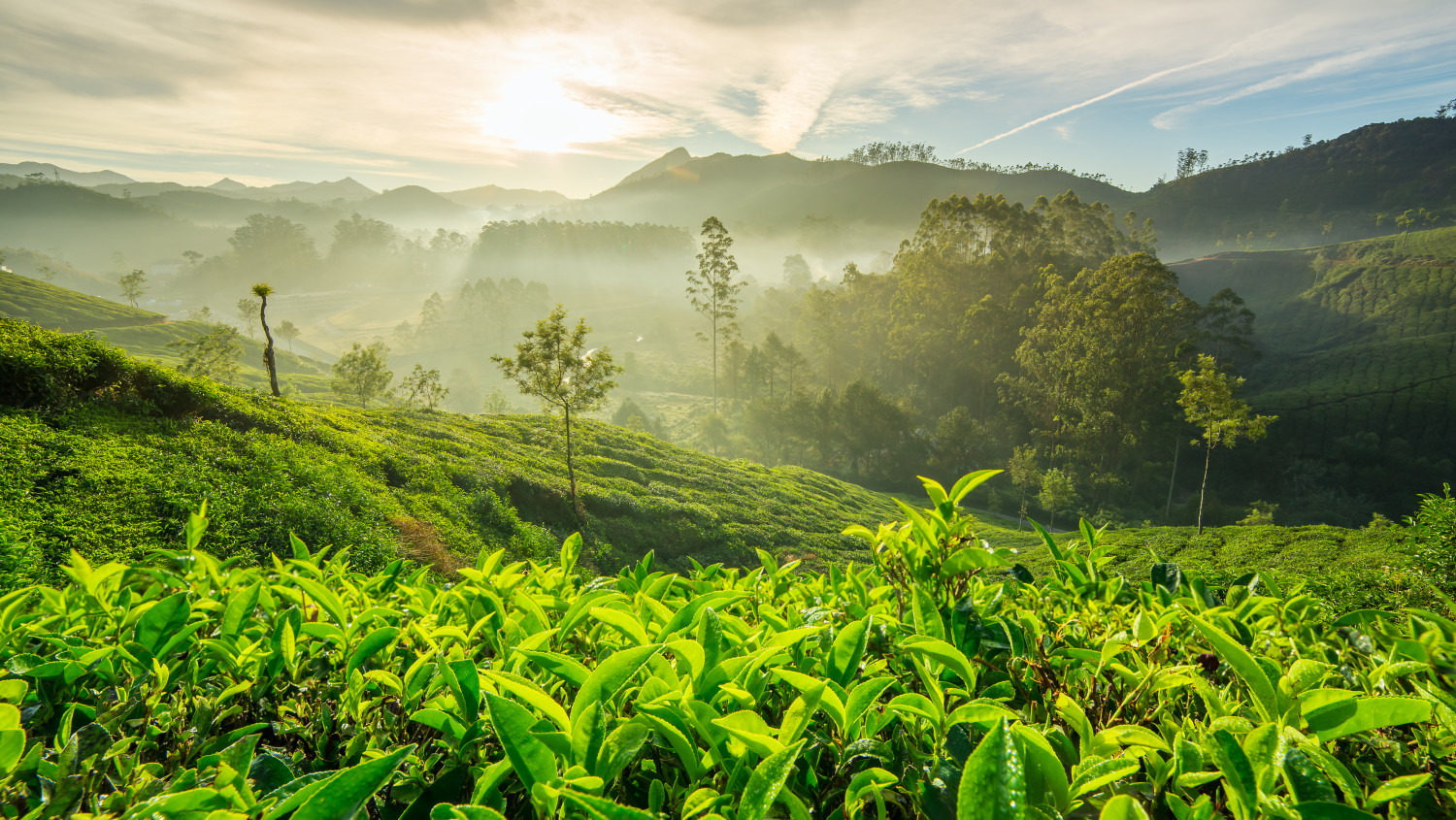 Image result for Amidst Lush Greenery of Munnar