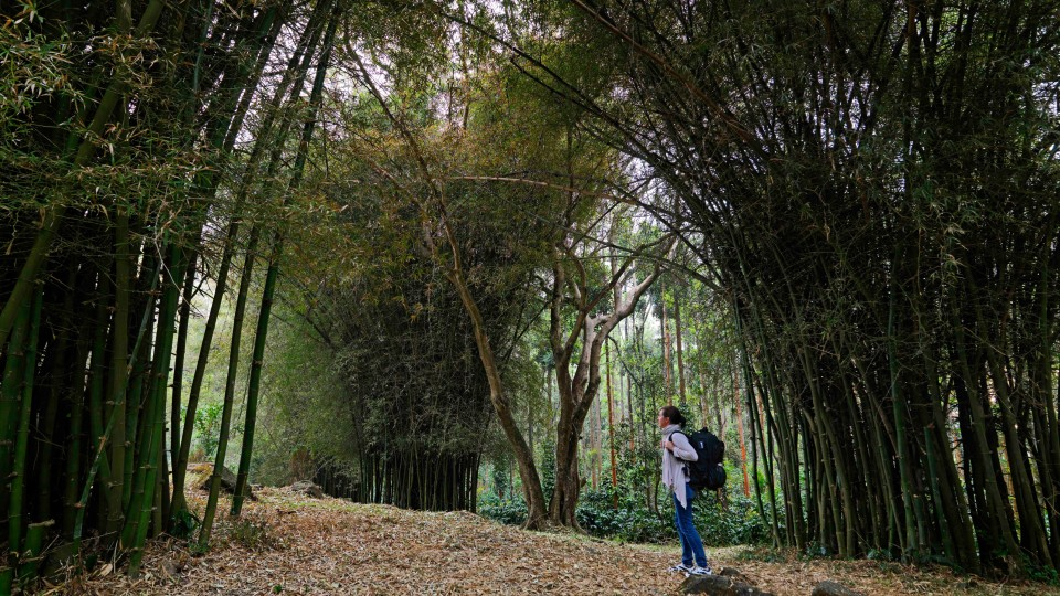 Bamboo Forest 0006