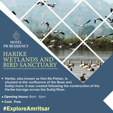Harike Wetlands-Amritsar -Sight Seeing