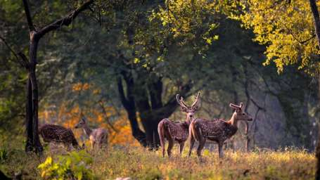 Kanha-National-Park-1024x576