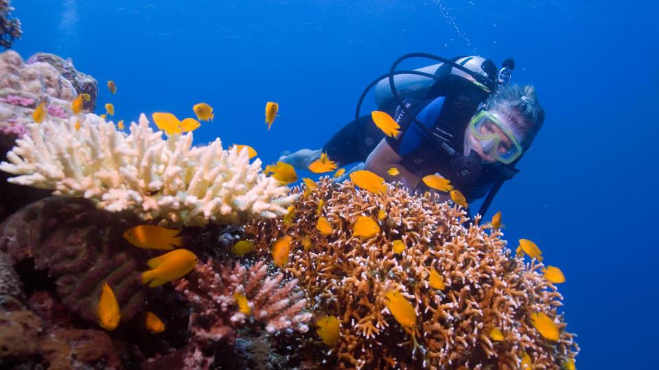25 Experiences Scuba Diving