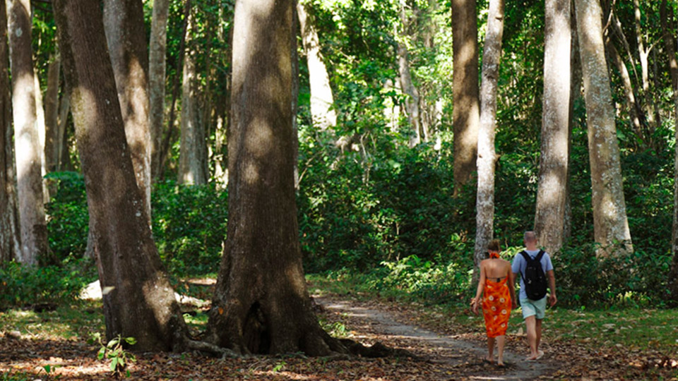 29 Experiences Walking in the Magical Mahua Forest