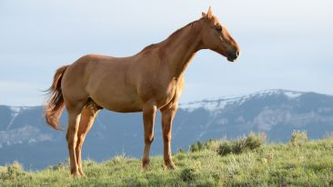 brown-horse-on-grass-field-635499