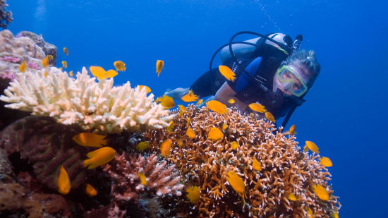 25 Experiences Scuba Diving i0v7om