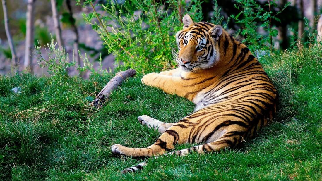 Rosa Bandhavgarh Meadows, Bandhavgarh Jungle Lodge, Bandhavgarh Resort 34