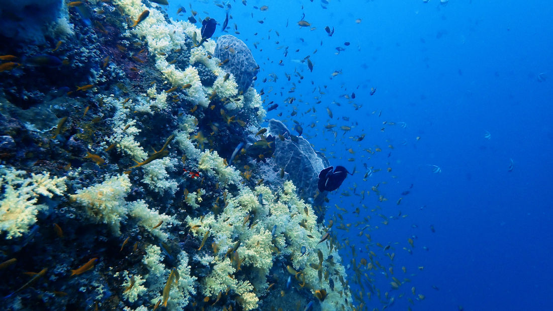 Dixon s Pinnacle Andaman Sea Photo by Mia Raghavi