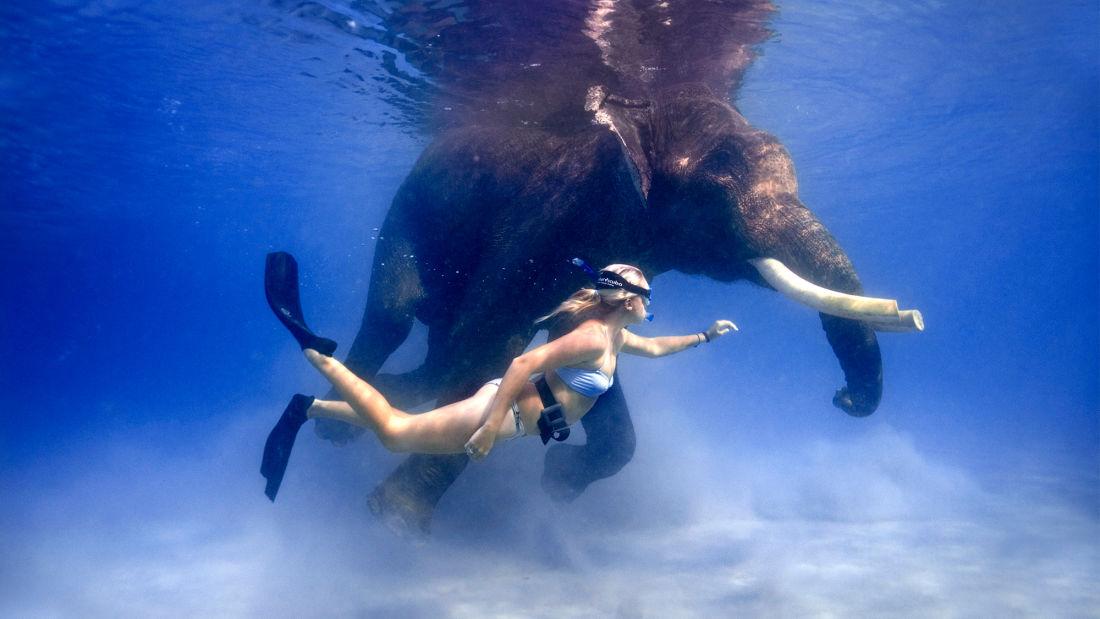 Rajan the Swimming Elephant Photo by Jillian Frits